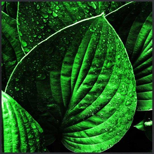 Quadro Decorativo com Folhas Verdes Moldura Preta 80x80 cm