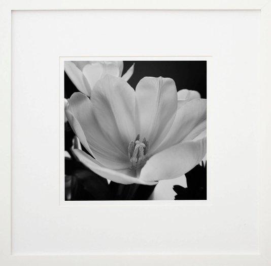 Quadro Decorativo em Preto e Branco Flor Tulipa 50x50cm