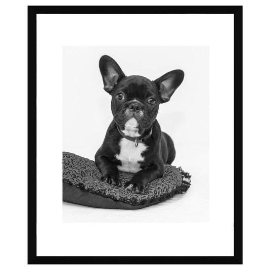 Quadro Decorativo em Preto e Branco Pet Bulldog Francês 50x60cm