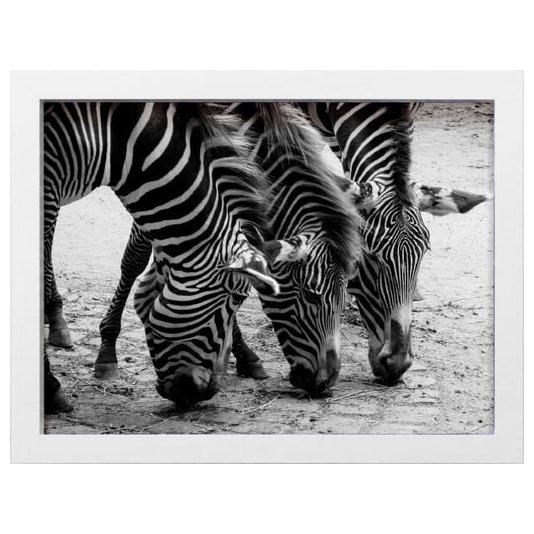 Quadro Decorativo em Preto e Branco Zebras Tomando Água 40x30cm