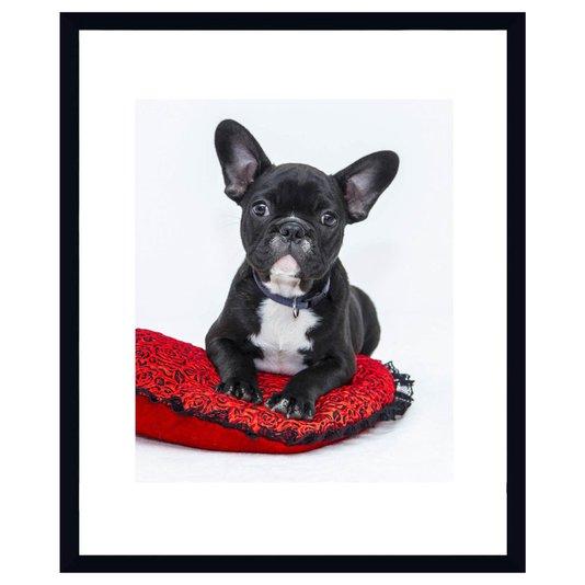 Quadro Decorativo Pet Bulldog Francês 50x60cm