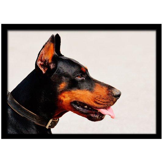 Quadro Poster com Moldura e Vidro Pet Cachorro Doberman 30x20 cm
