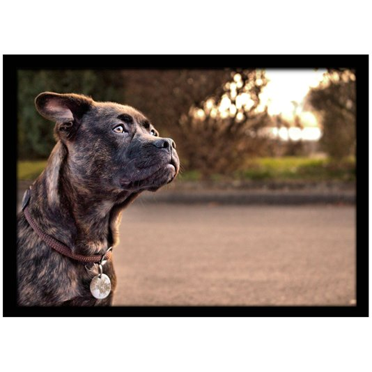 Quadro Poster com Moldura e Vidro Pet Cachorro Dog 30x20 cm