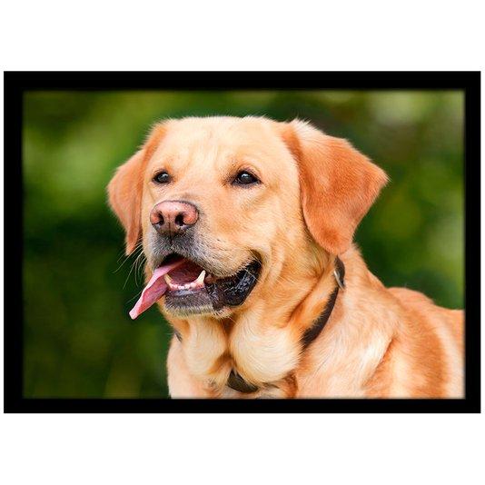 Quadro Poster com Moldura e Vidro Pet Cachorro Labrador 30x20 cm