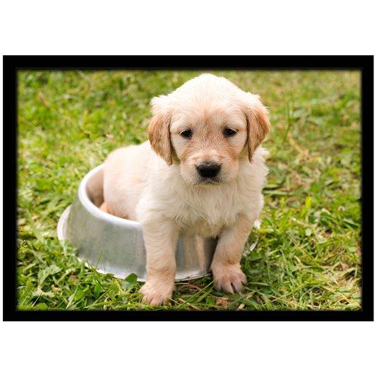 Quadro Poster com Moldura e Vidro Pet Filhote Labrador 30x20 cm