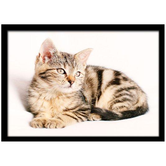 Quadro Poster com Moldura e Vidro Pet Gatinho Deitado 30x20 cm
