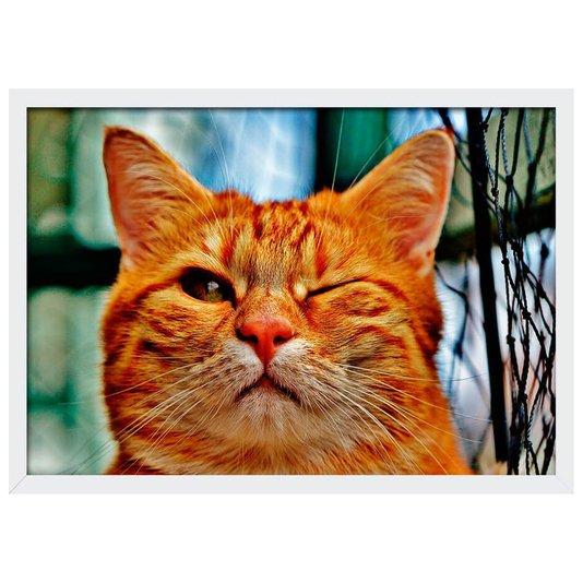Quadro Poster com Moldura e Vidro Pet Gato Piscando 30x20 cm