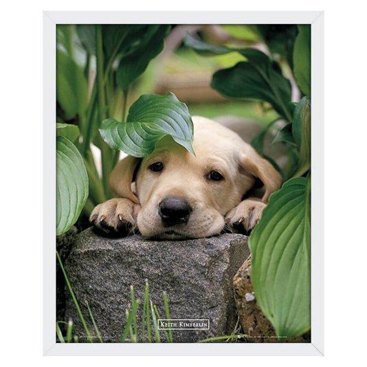 Quadro Decorativo Poster Filhote de Cachorro Labrador s/ Vidro 40x50cm
