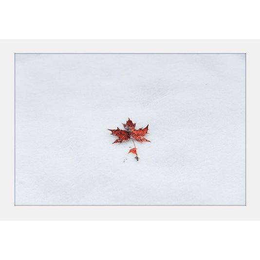 Quadro Decorativo Imagem Minimalista Flor de Bordo 30x20cm