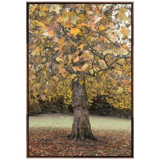 Quadro em Tela Canvas Árvore Londres por Dorival Moreira 100x150cm