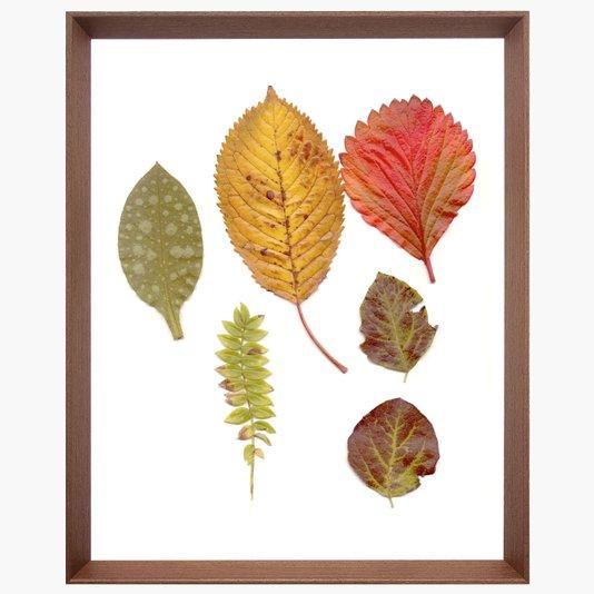 Quadro Folhas de Outono com Moldura Chanfrada Marrom 40x50cm