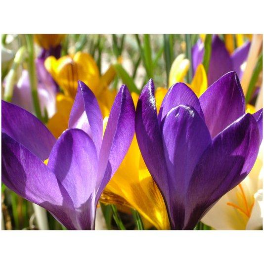 Quadro Tela Decorativa Primavera Flores Coloridas 100x75cm
