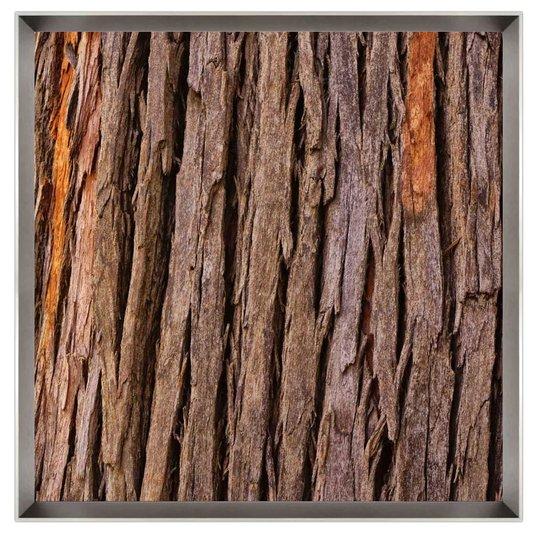 Quadro Textura Casca de Árvore por Dorival Moreira 75x75 cm
