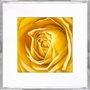 Quadro Decorativo Moldura em Alumínio Flor Amarela 45x45cm
