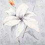 Quadro Tela Impressa Flor Branca 60x60cm DPPI110290C