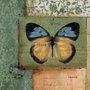 Quadro Tela Decorativa Inseto Borboleta Azul e Amarela 30x30cm